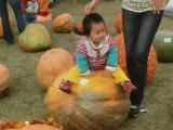 CIMG4326_20111108002928.jpg